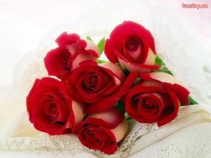 Hoa hong trong tim