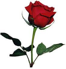 hoa 1